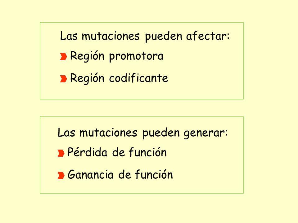 Las mutaciones pueden afectar: