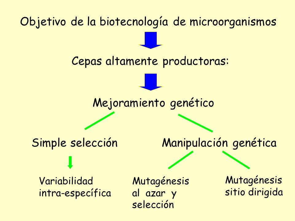 Objetivo de la biotecnología de microorganismos