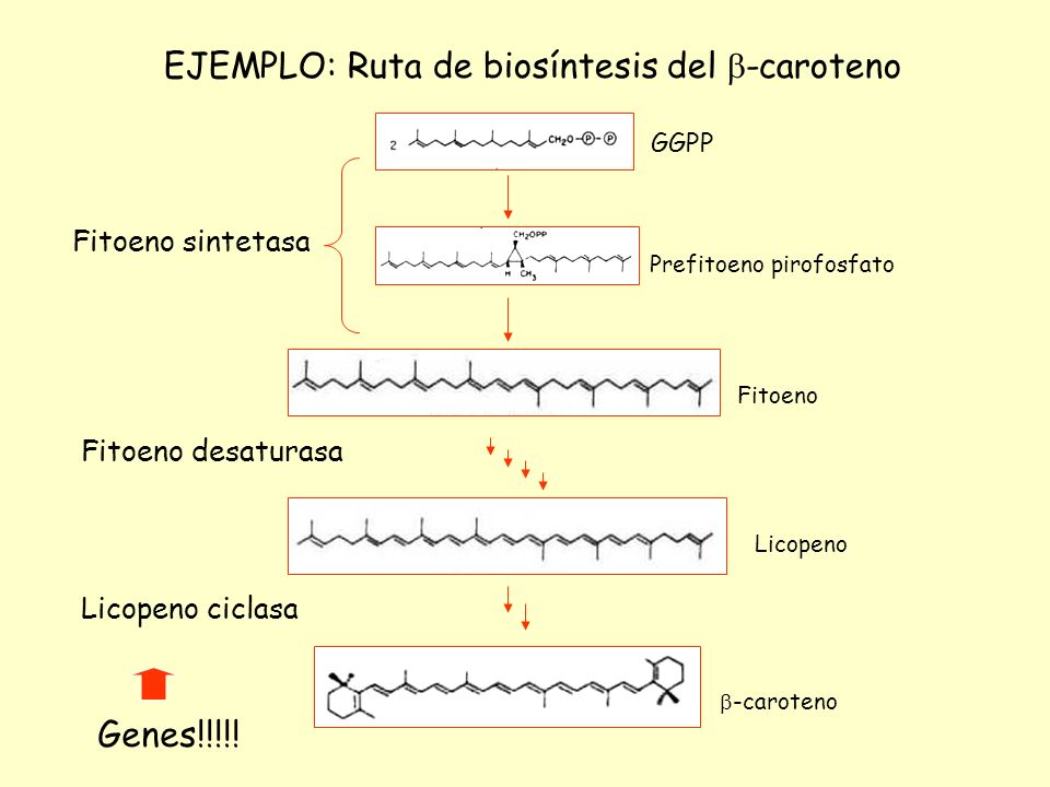 EJEMPLO: Ruta de biosíntesis del -caroteno