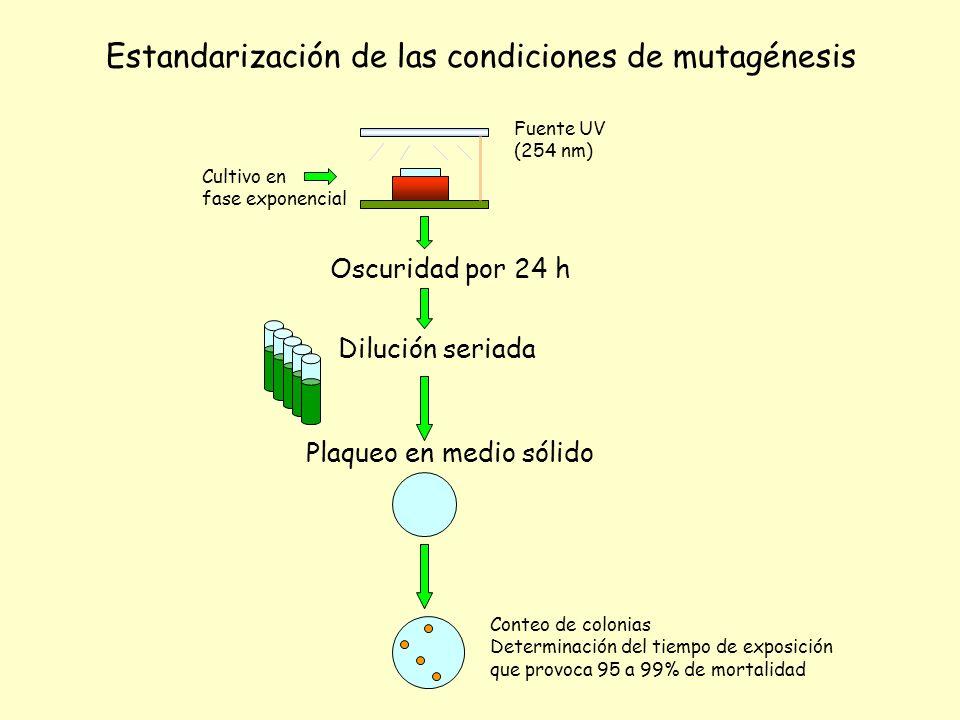 Estandarización de las condiciones de mutagénesis