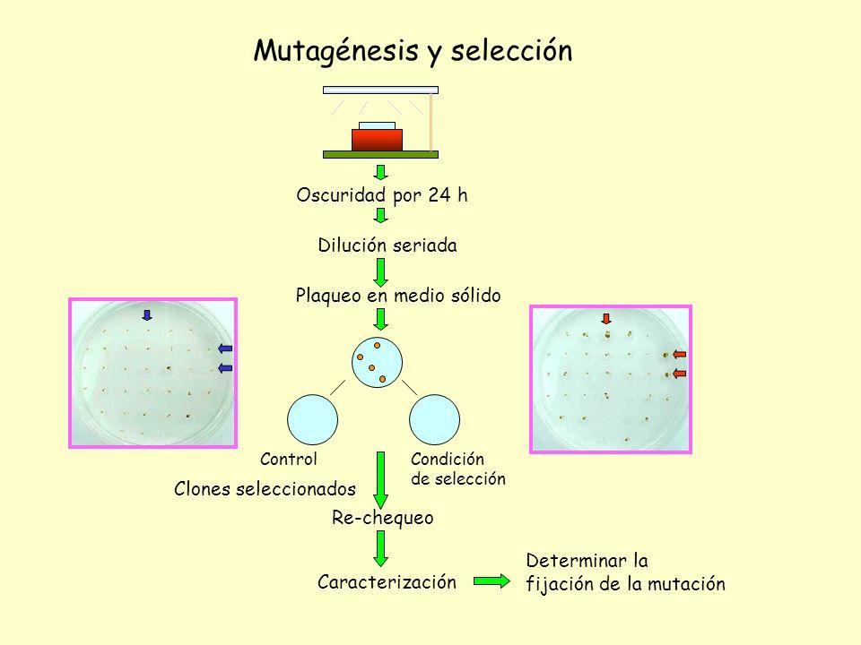 Mutagénesis y selección