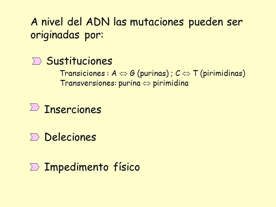 A nivel del ADN las mutaciones pueden ser originadas por: