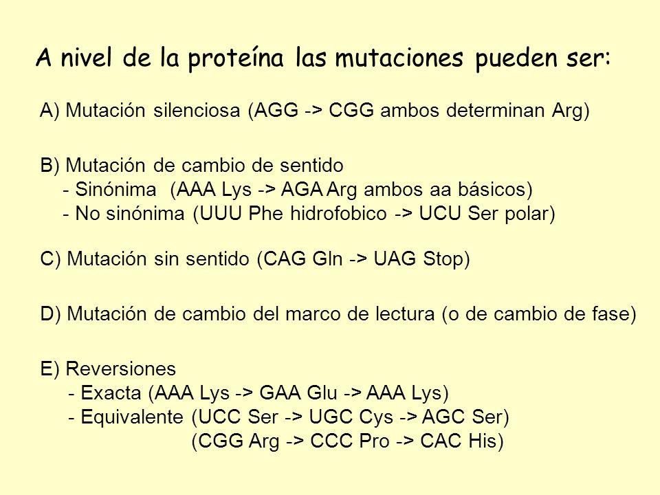 A nivel de la proteína las mutaciones pueden ser: