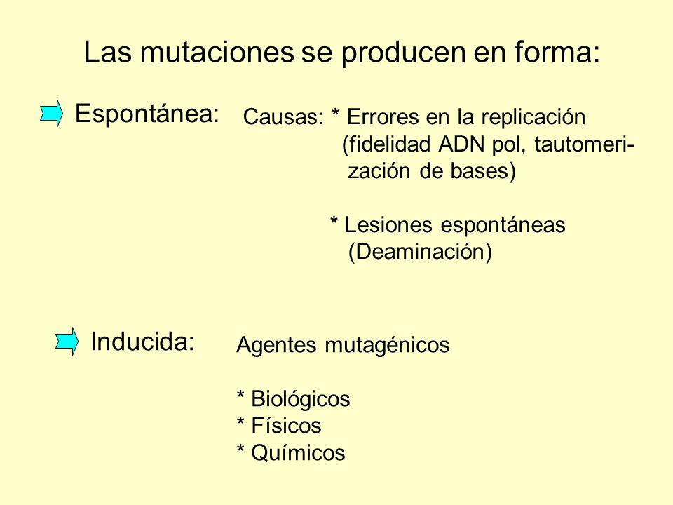 Las mutaciones se producen en forma: