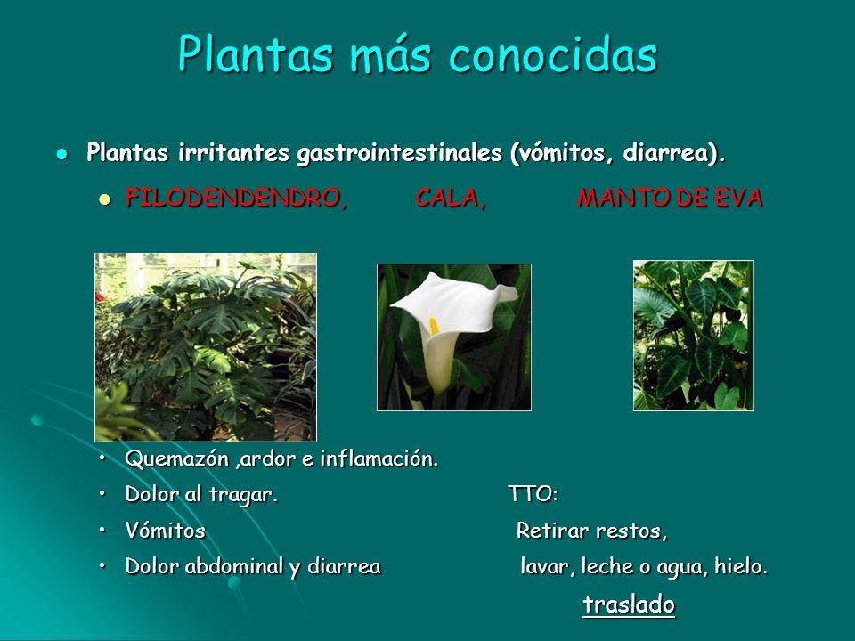 Plantas más conocidasPlantas irritantes gastrointestinales (vómitos, diarrea). FILODENDENDRO, CALA, MANTO DE EVA.