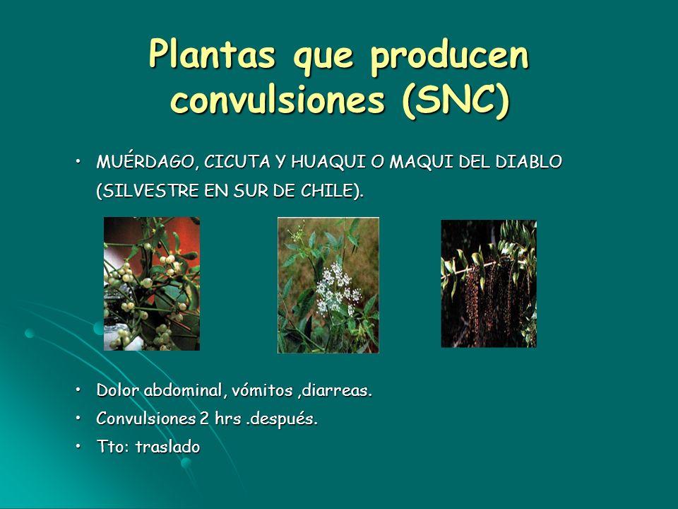 Plantas que producen convulsiones (SNC)