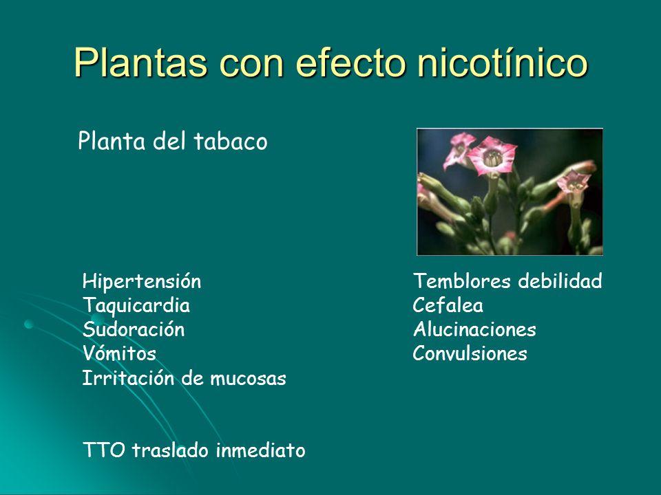 Plantas con efecto nicotínico