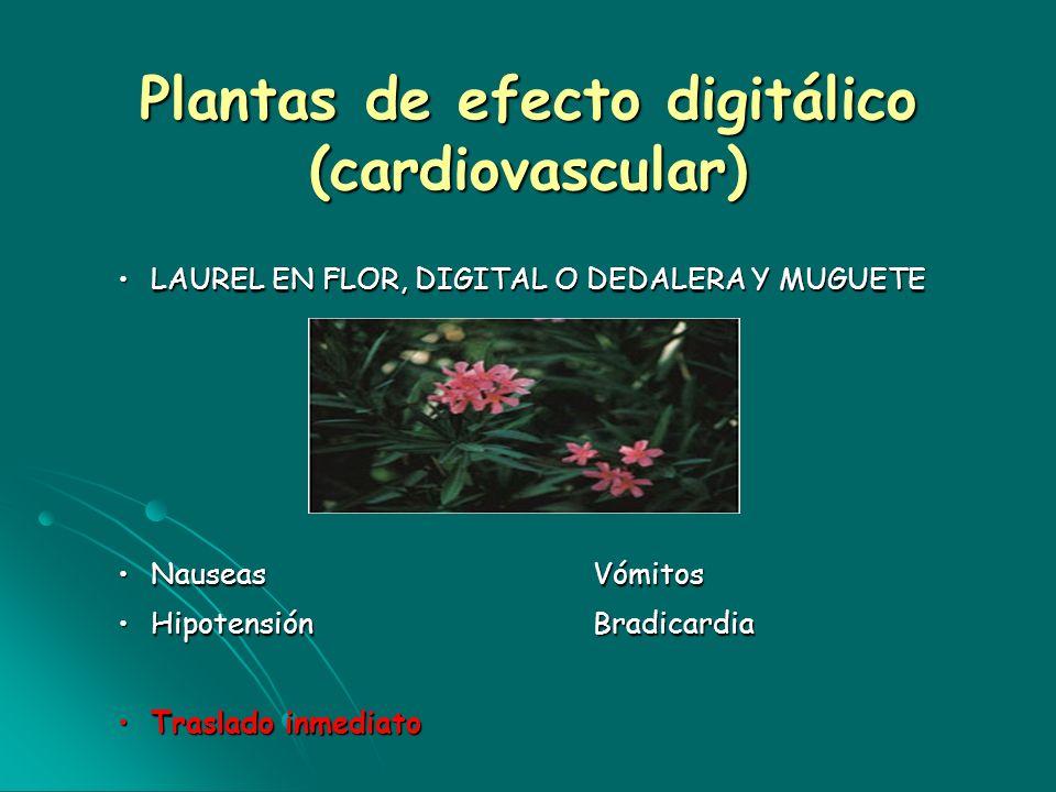 Plantas de efecto digitálico (cardiovascular)