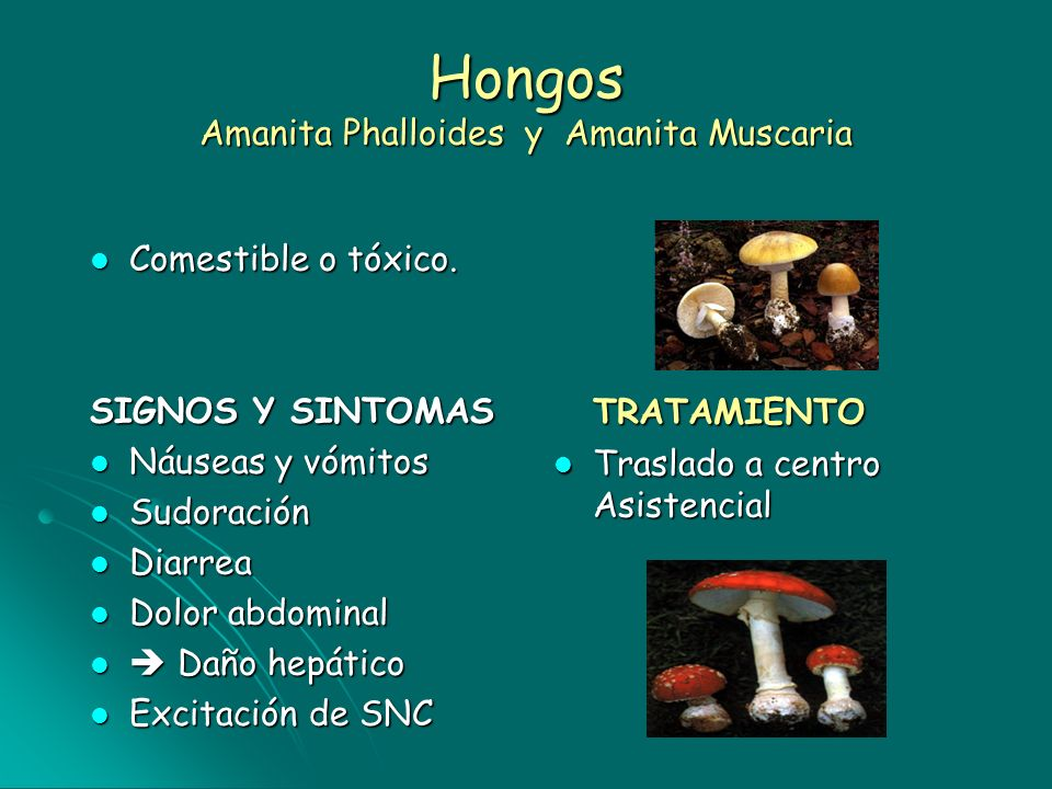 Hongos Amanita Phalloides y Amanita Muscaria