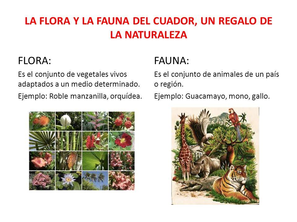 LA FLORA Y LA FAUNA DEL CUADOR, UN REGALO DE LA NATURALEZA