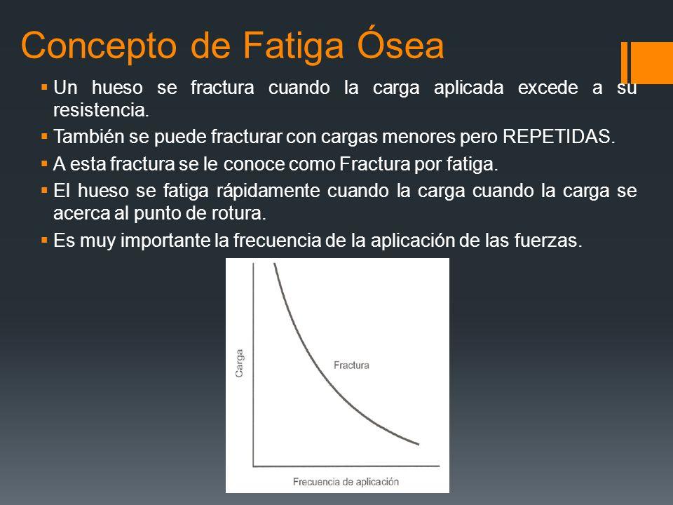 Concepto de Fatiga Ósea