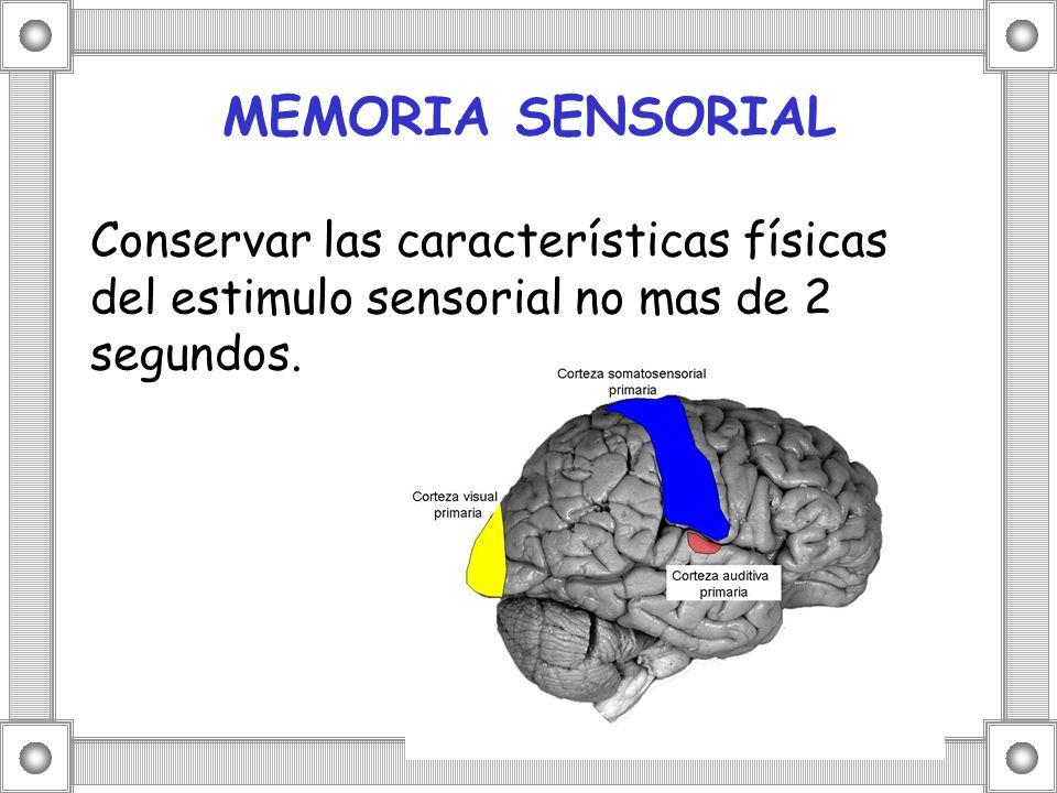 MEMORIA SENSORIAL Conservar las características físicas del estimulo sensorial no mas de 2 segundos.