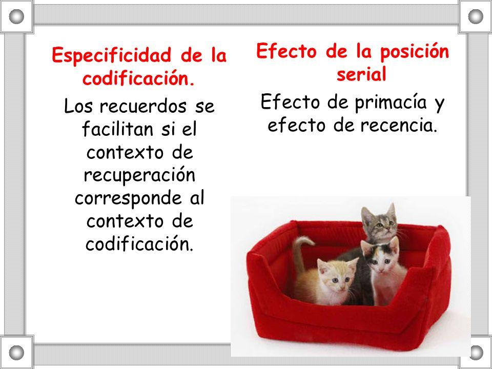 Efecto de la posición serial Efecto de primacía y efecto de recencia.