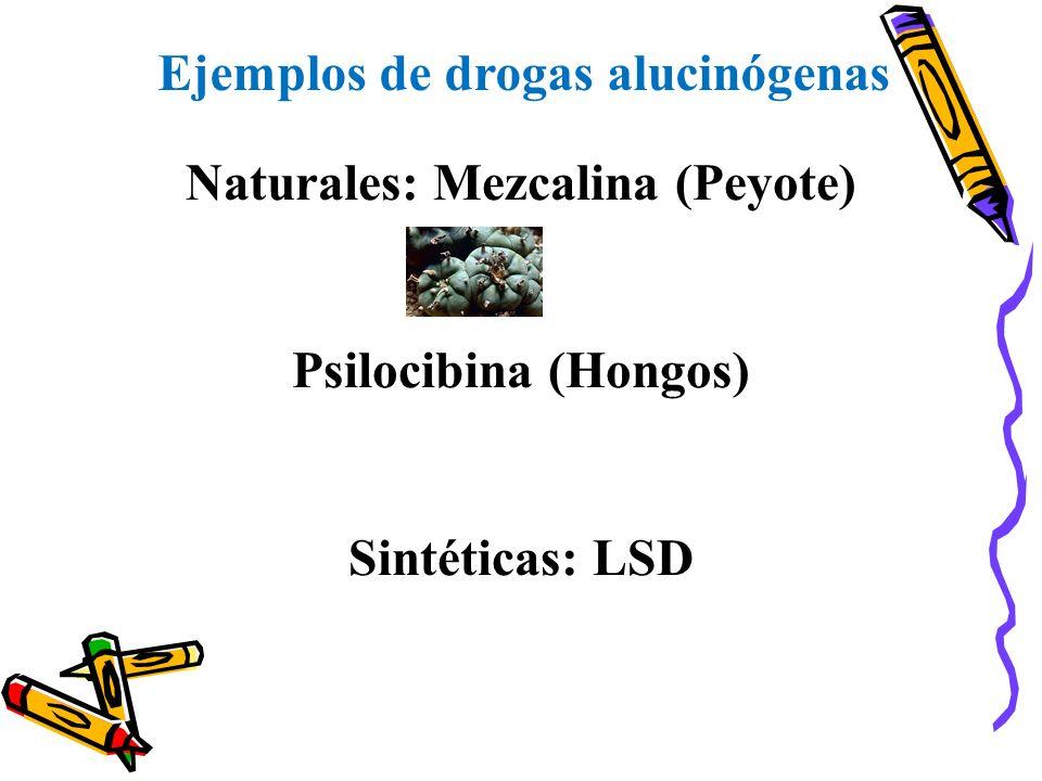Ejemplos de drogas alucinógenas Naturales: Mezcalina (Peyote)