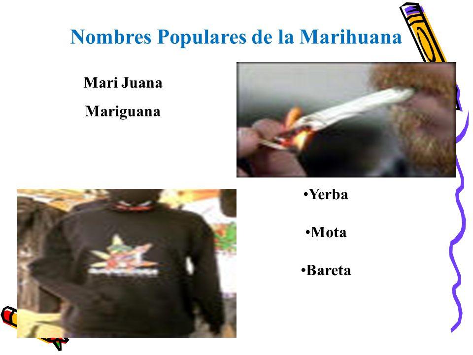 Nombres Populares de la Marihuana
