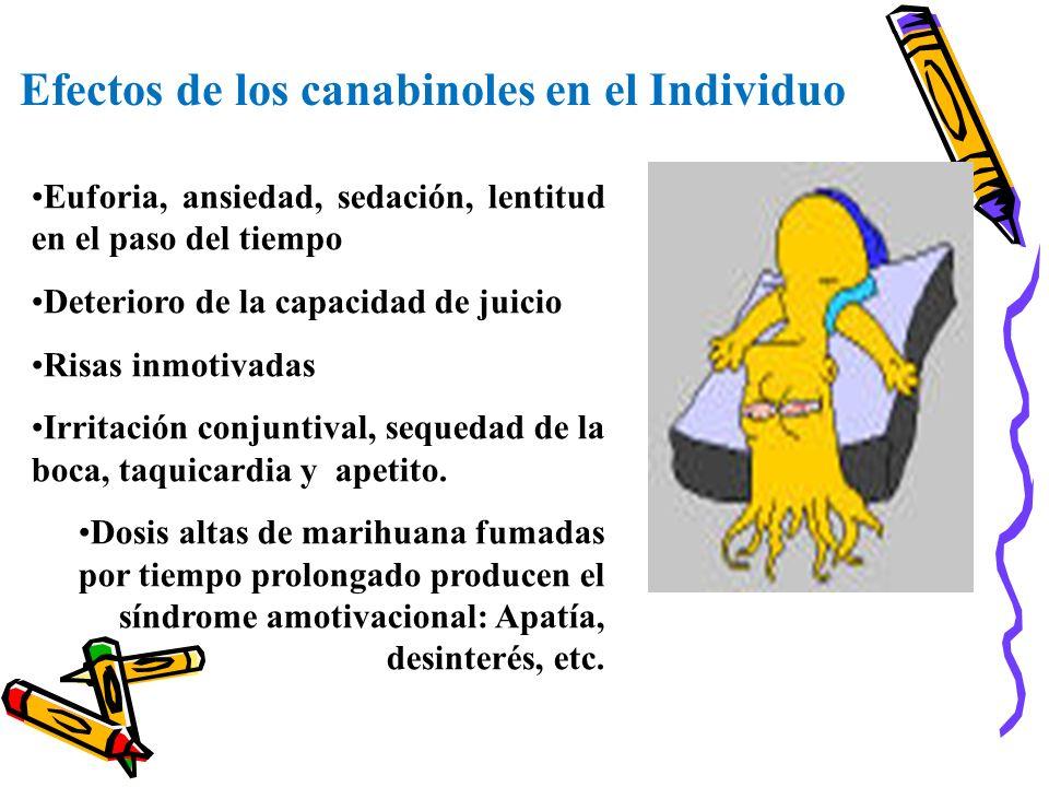 Efectos de los canabinoles en el Individuo