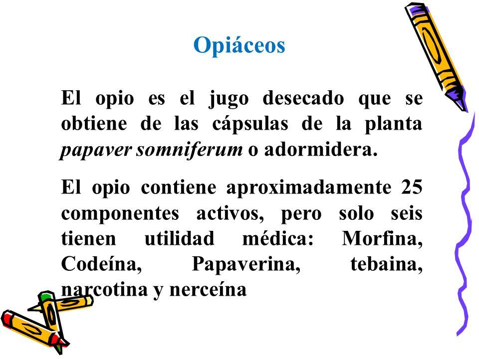 Opiáceos El opio es el jugo desecado que se obtiene de las cápsulas de la planta papaver somniferum o adormidera.