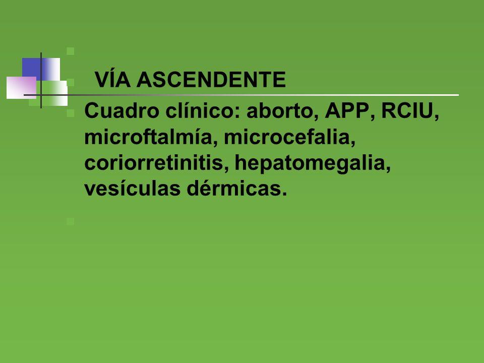 VÍA ASCENDENTE. Cuadro clínico: aborto, APP, RCIU, microftalmía, microcefalia, coriorretinitis, hepatomegalia, vesículas dérmicas.