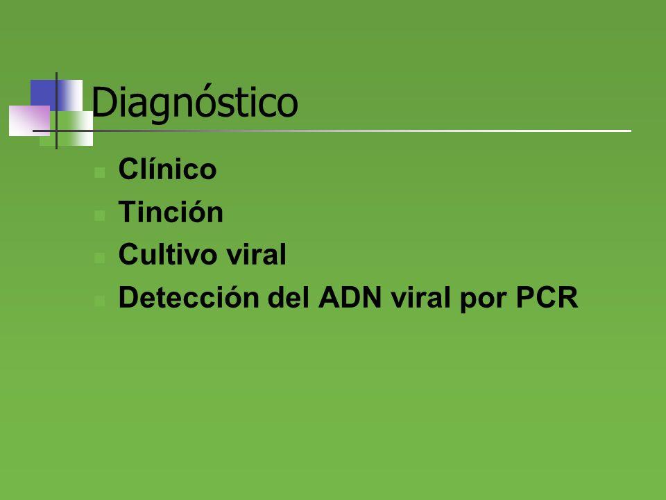 Diagnóstico Clínico Tinción Cultivo viral