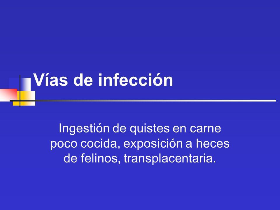 Vías de infección Ingestión de quistes en carne poco cocida, exposición a heces de felinos, transplacentaria.