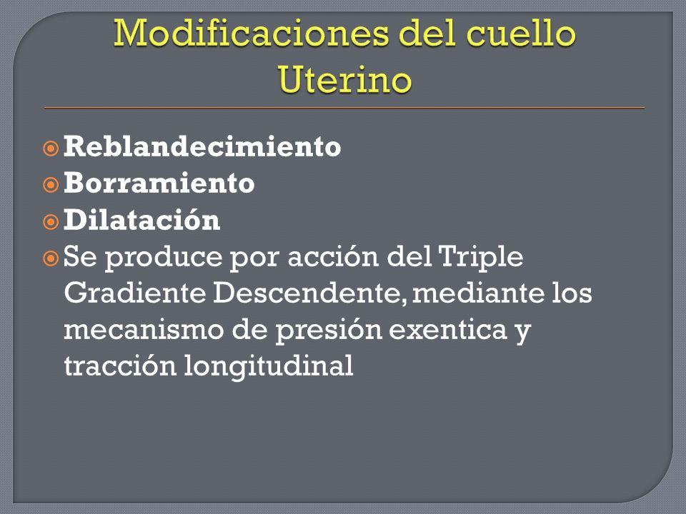 Modificaciones del cuello Uterino