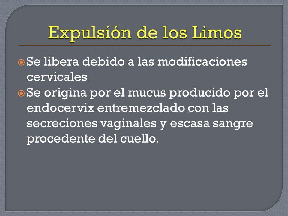 Expulsión de los Limos Se libera debido a las modificaciones cervicales.