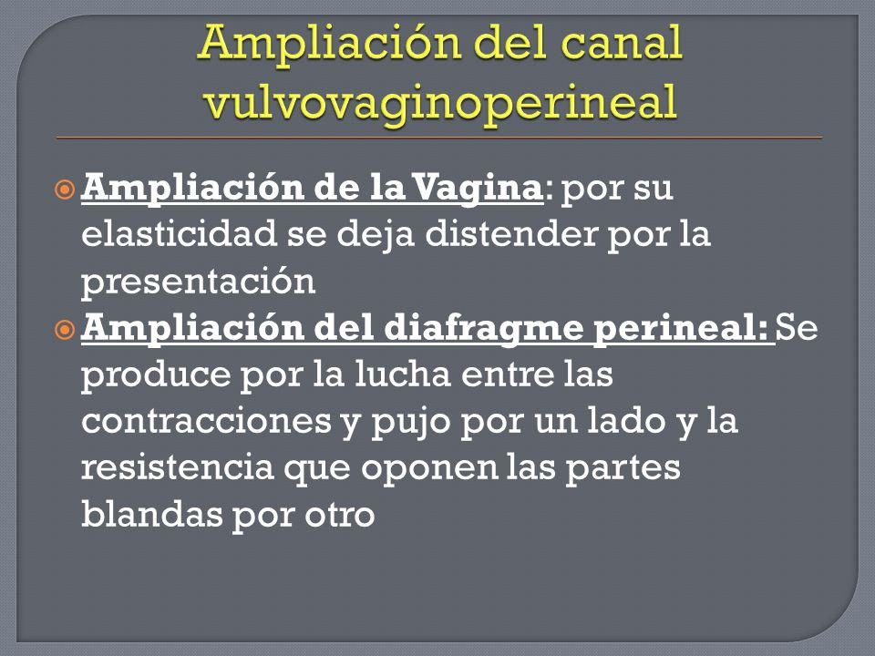 Ampliación del canal vulvovaginoperineal