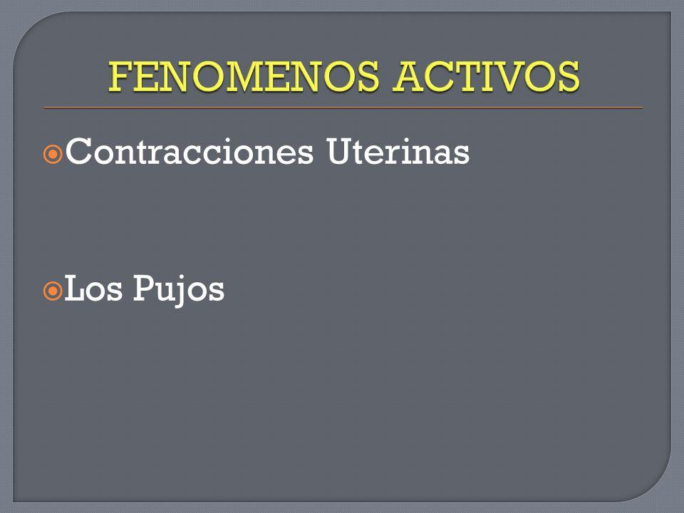 FENOMENOS ACTIVOS Contracciones Uterinas Los Pujos