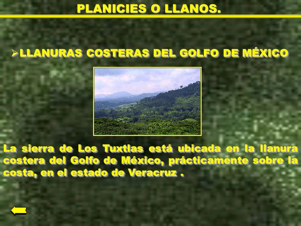LLANURAS COSTERAS DEL GOLFO DE MÉXICO