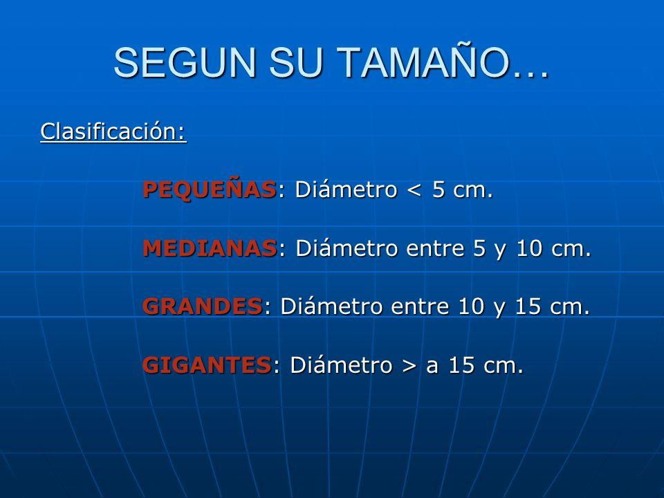 SEGUN SU TAMAÑO… Clasificación: PEQUEÑAS: Diámetro < 5 cm.