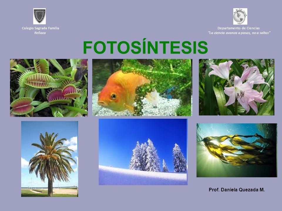 FOTOSÍNTESIS Prof. Daniela Quezada M.