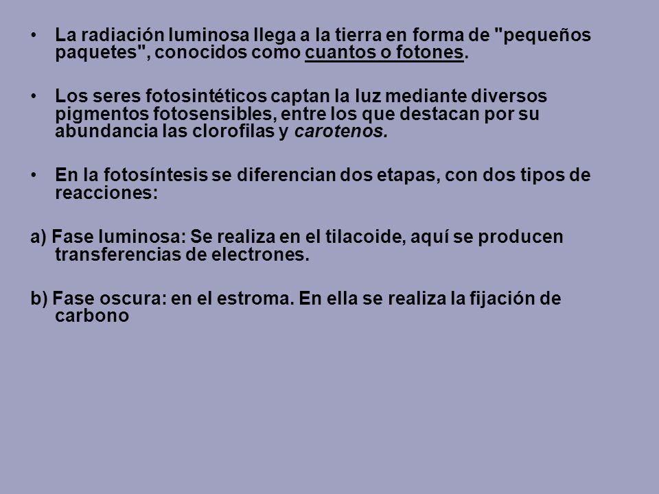 La radiación luminosa llega a la tierra en forma de pequeños paquetes , conocidos como cuantos o fotones.