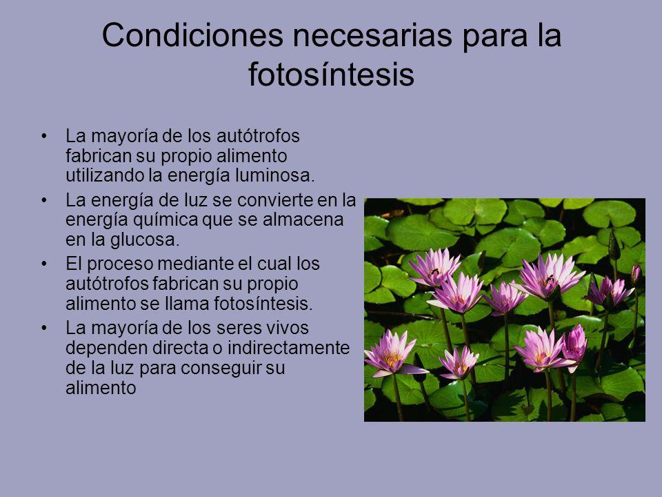 Condiciones necesarias para la fotosíntesis