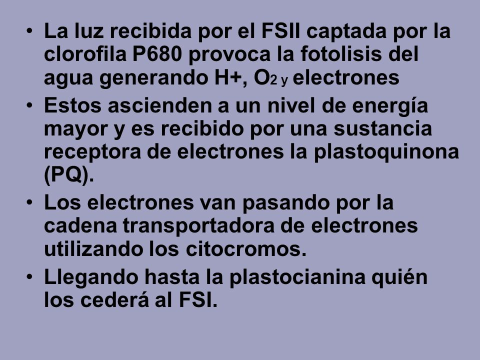 La luz recibida por el FSII captada por la clorofila P680 provoca la fotolisis del agua generando H+, O2 y electrones