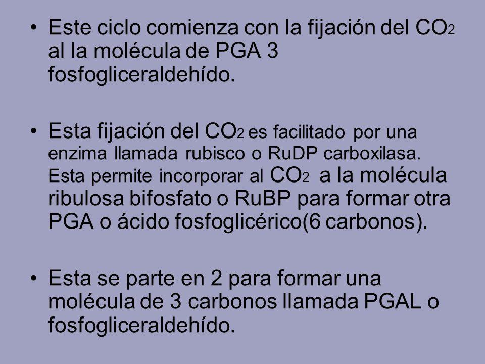 Este ciclo comienza con la fijación del CO2 al la molécula de PGA 3 fosfogliceraldehído.