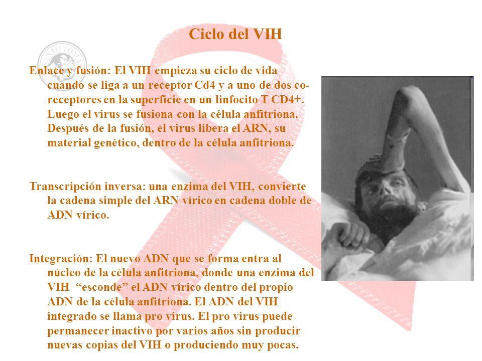 Ciclo del VIH