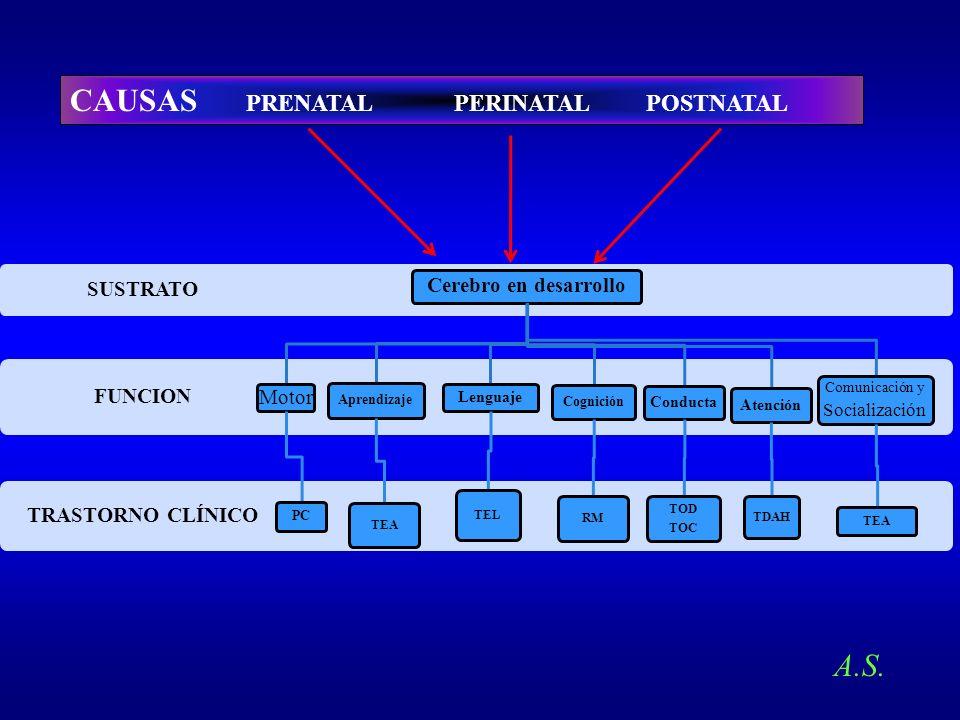 CAUSAS PRENATAL PERINATAL POSTNATAL