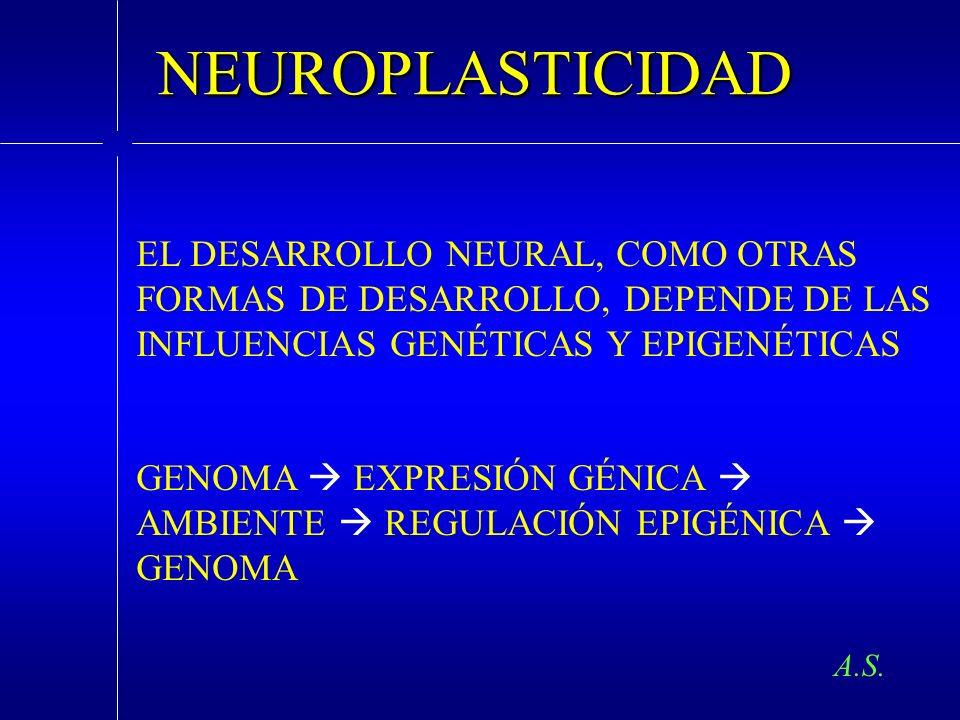NEUROPLASTICIDADEL DESARROLLO NEURAL, COMO OTRAS FORMAS DE DESARROLLO, DEPENDE DE LAS INFLUENCIAS GENÉTICAS Y EPIGENÉTICAS.