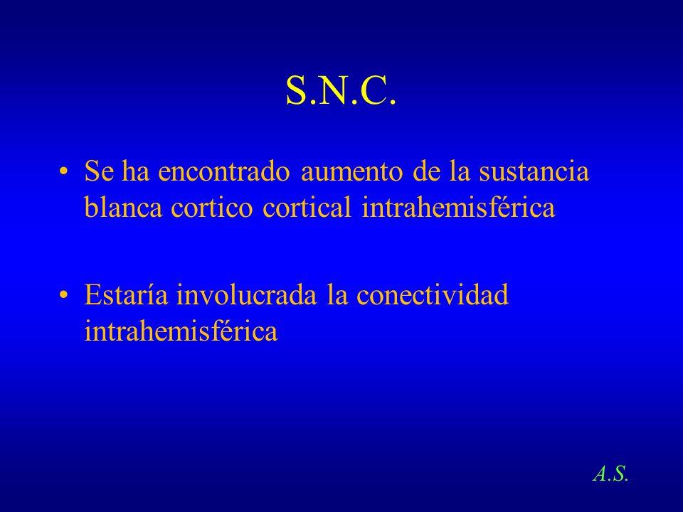 S.N.C.Se ha encontrado aumento de la sustancia blanca cortico cortical intrahemisférica. Estaría involucrada la conectividad intrahemisférica.