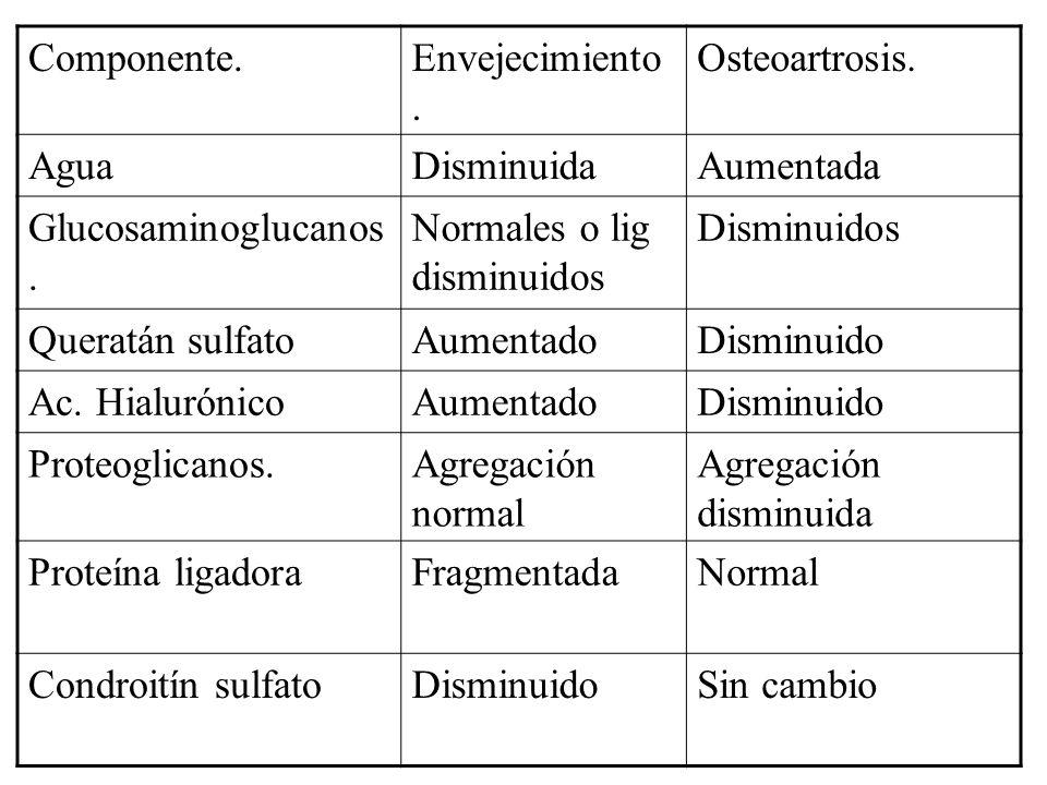 Componente. Envejecimiento. Osteoartrosis. Agua. Disminuida. Aumentada. Glucosaminoglucanos. Normales o lig disminuidos.
