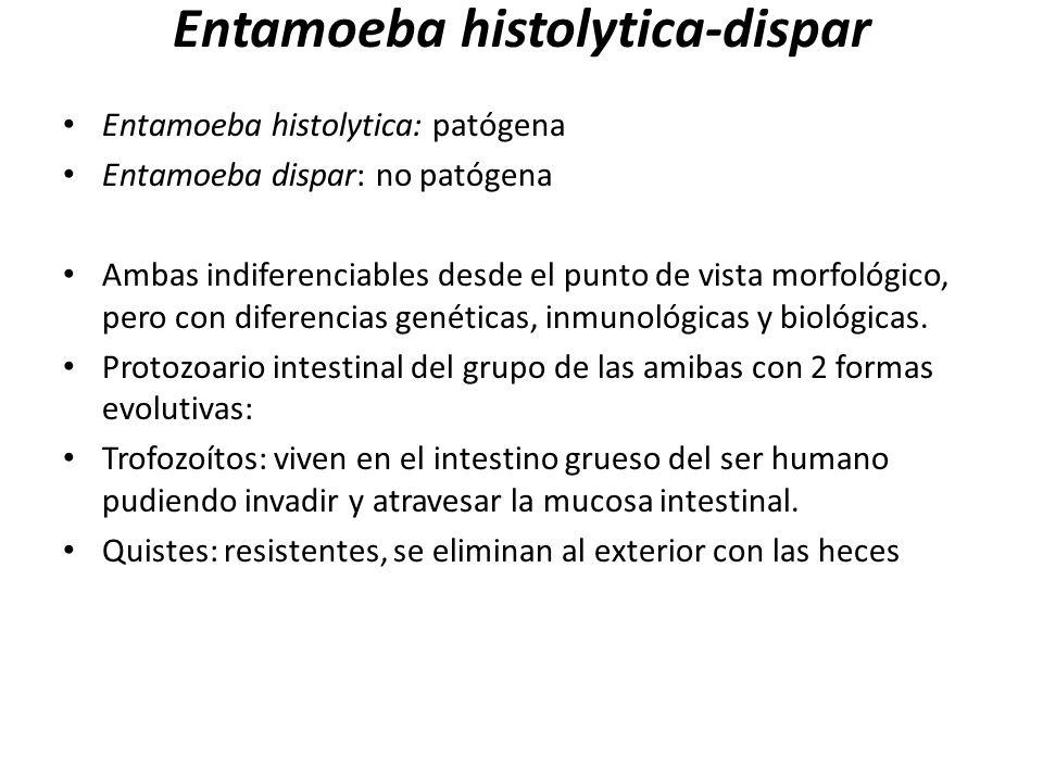 Entamoeba histolytica-dispar