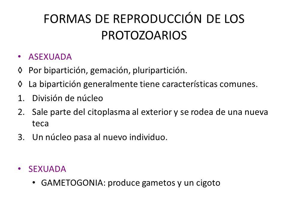 FORMAS DE REPRODUCCIÓN DE LOS PROTOZOARIOS