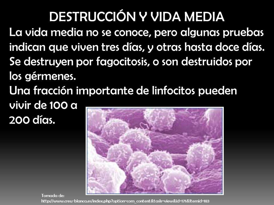 DESTRUCCIÓN Y VIDA MEDIA
