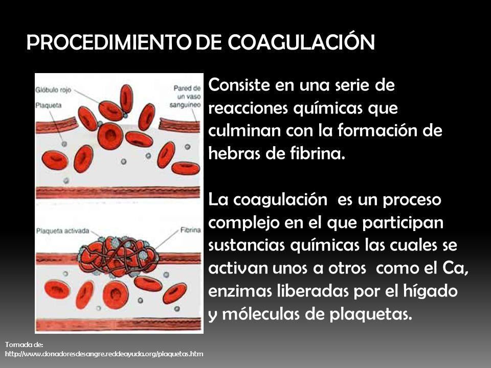 PROCEDIMIENTO DE COAGULACIÓN
