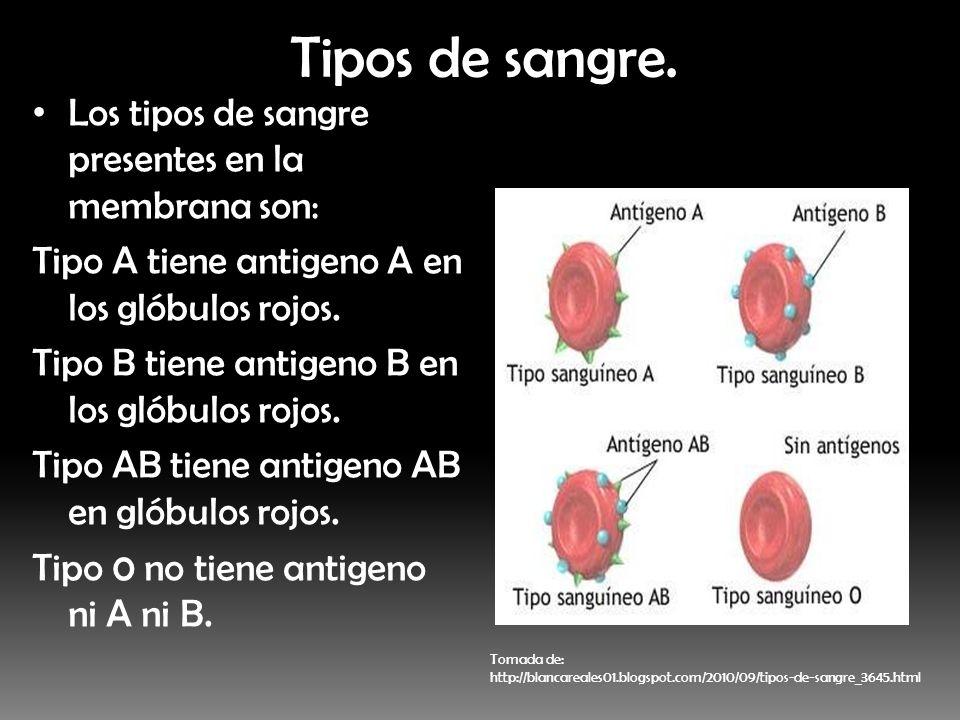 Tipos de sangre. Los tipos de sangre presentes en la membrana son: