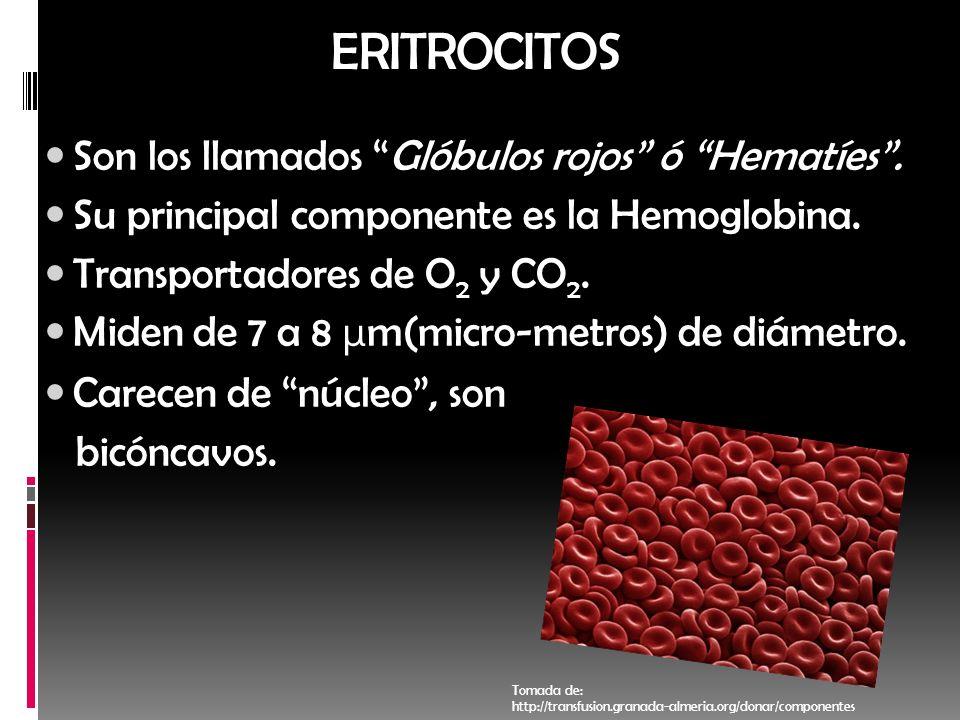 ERITROCITOS Son los llamados Glóbulos rojos ó Hematíes .