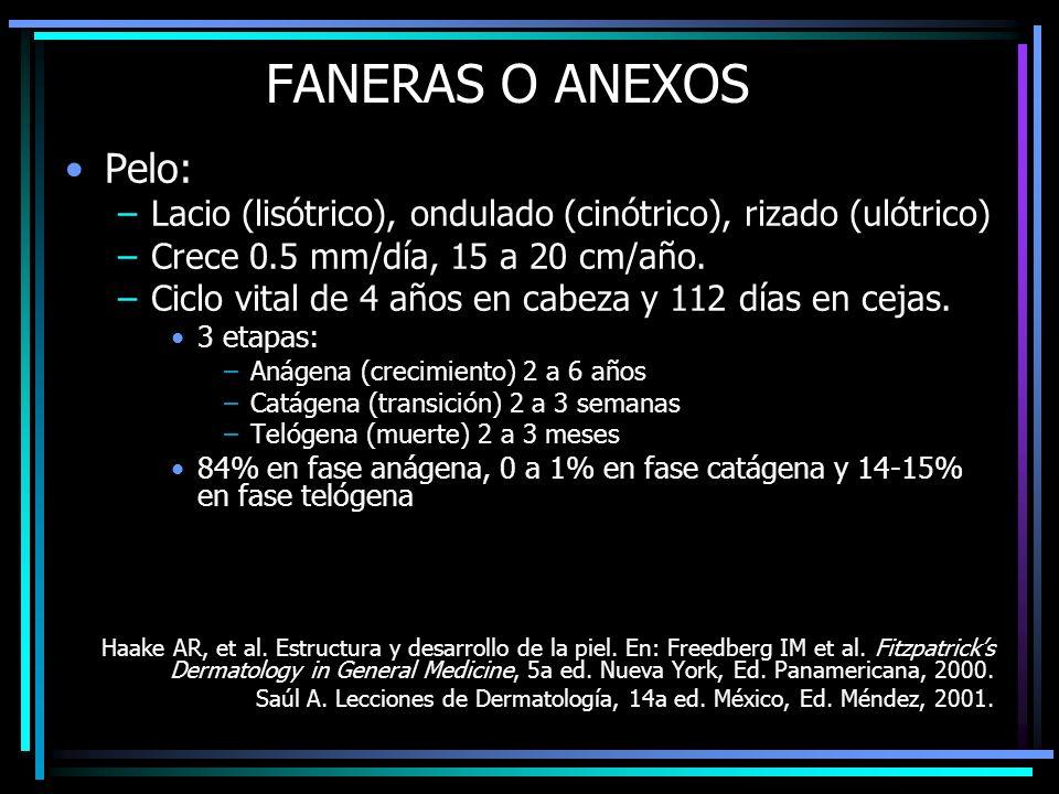 FANERAS O ANEXOS Pelo: Lacio (lisótrico), ondulado (cinótrico), rizado (ulótrico) Crece 0.5 mm/día, 15 a 20 cm/año.