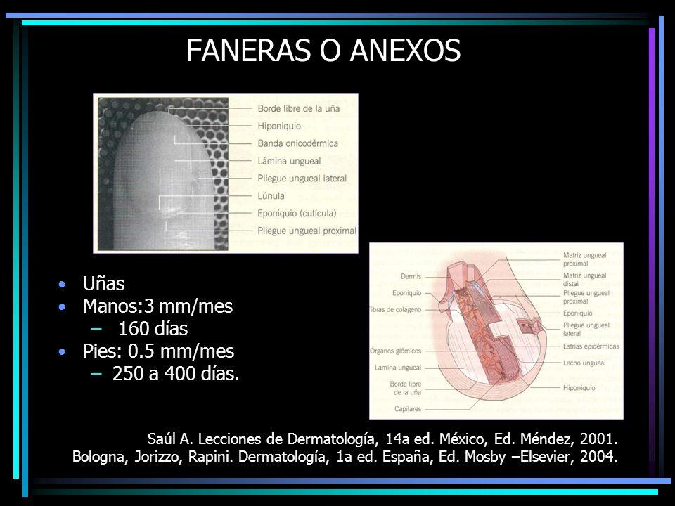 FANERAS O ANEXOS Uñas Manos:3 mm/mes 160 días Pies: 0.5 mm/mes