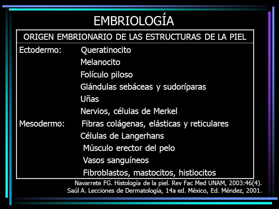 ORIGEN EMBRIONARIO DE LAS ESTRUCTURAS DE LA PIEL