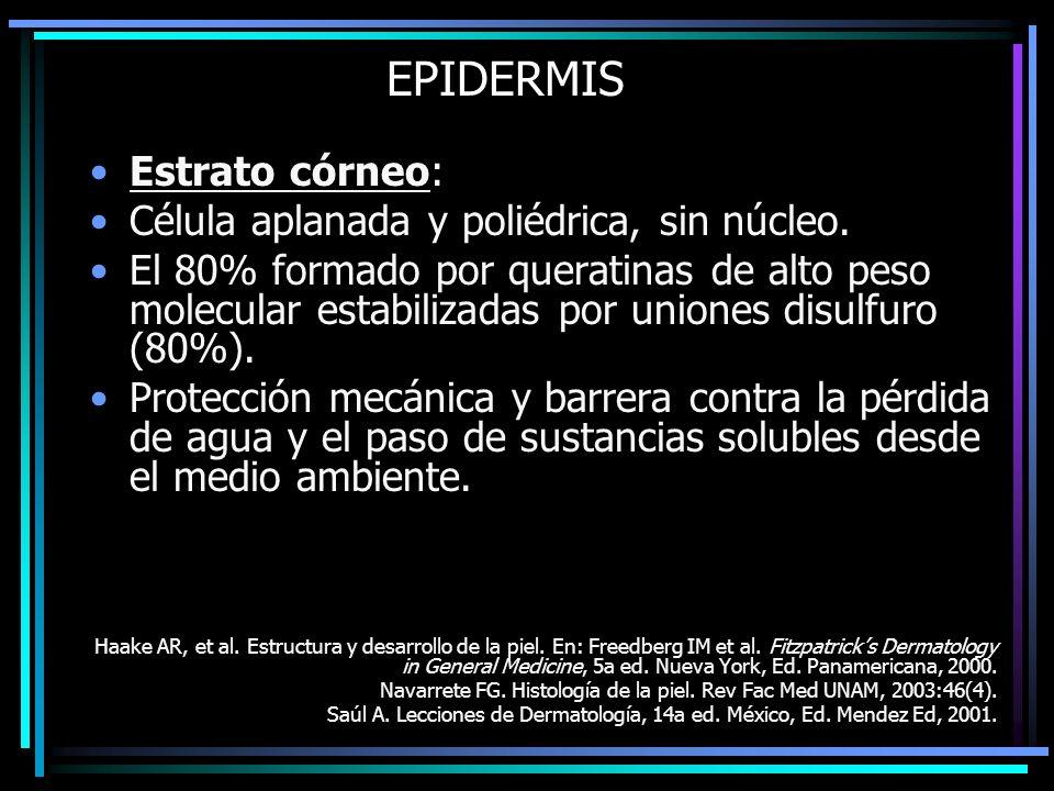 EPIDERMIS Estrato córneo: Célula aplanada y poliédrica, sin núcleo.